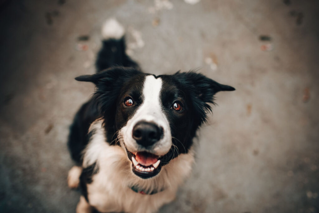 Aggressive Dog Training Tips