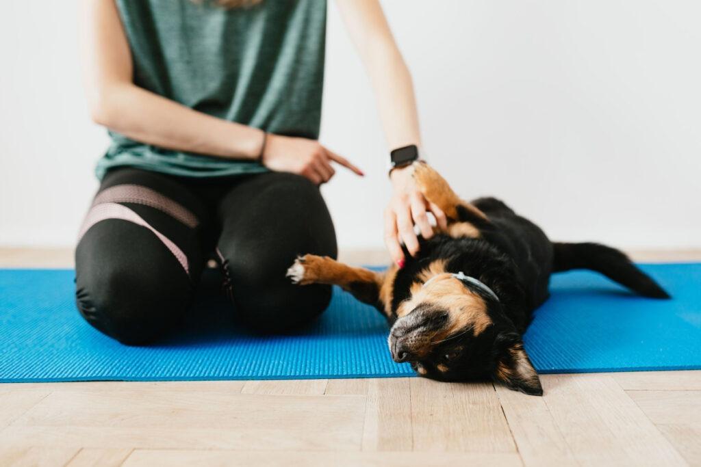 Best Dog Training Technique