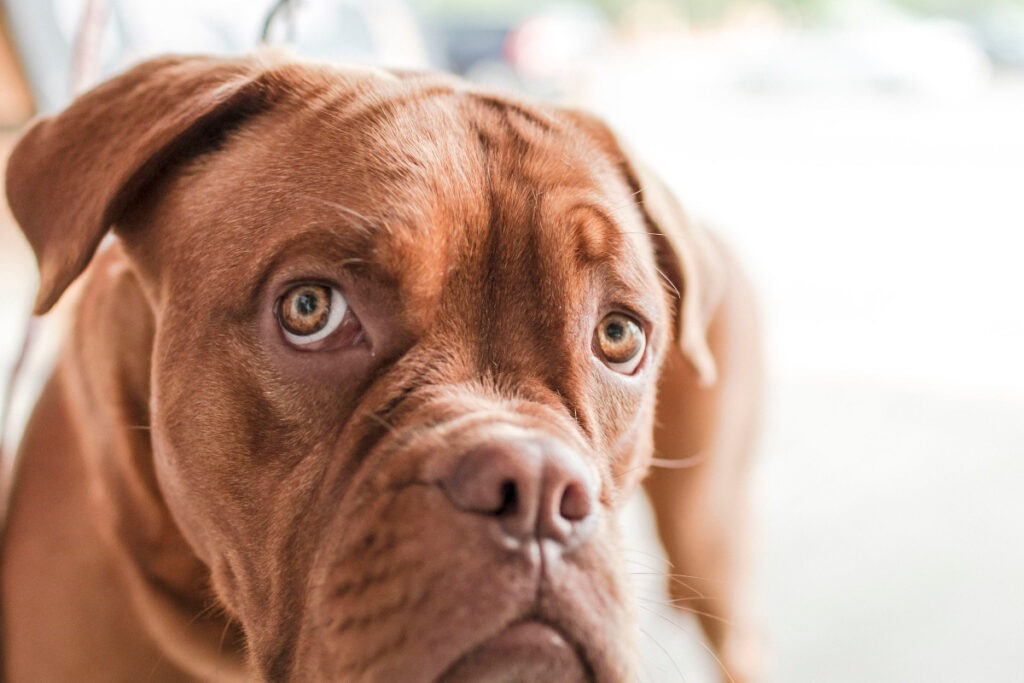 Dog Training Tips For Aggressive Dogs