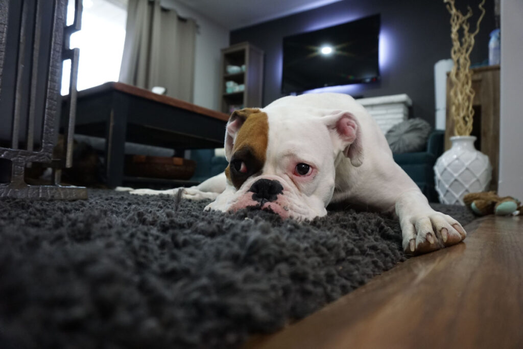 House Training For Your Dog
