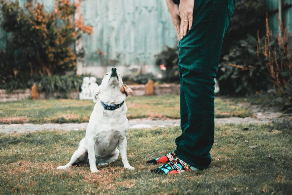 Dog Training 101 Tips