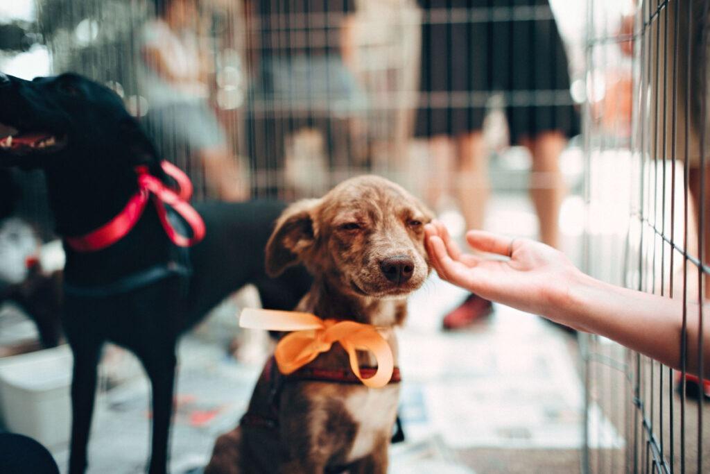 How Do I House Train A Puppy