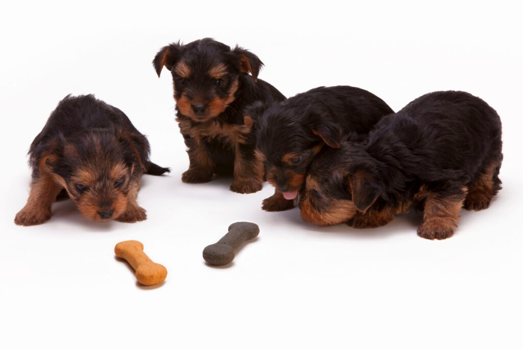 Obedience Training For Dogs At Home