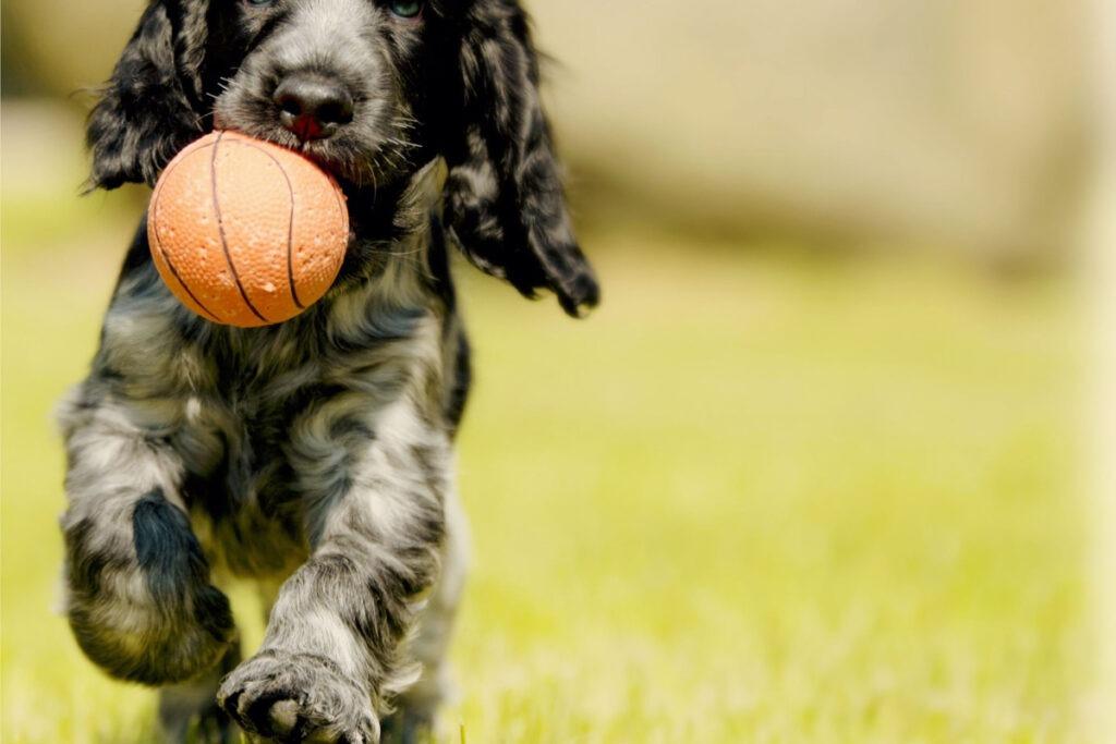 Basic Dog Training Ideas