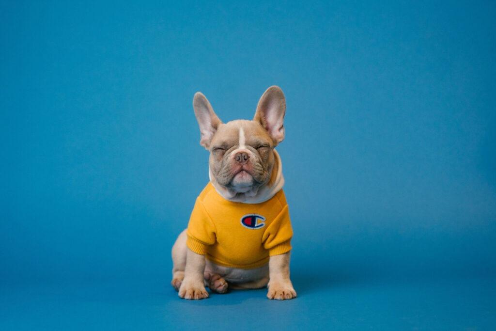 Best Puppy Potty Training Tips