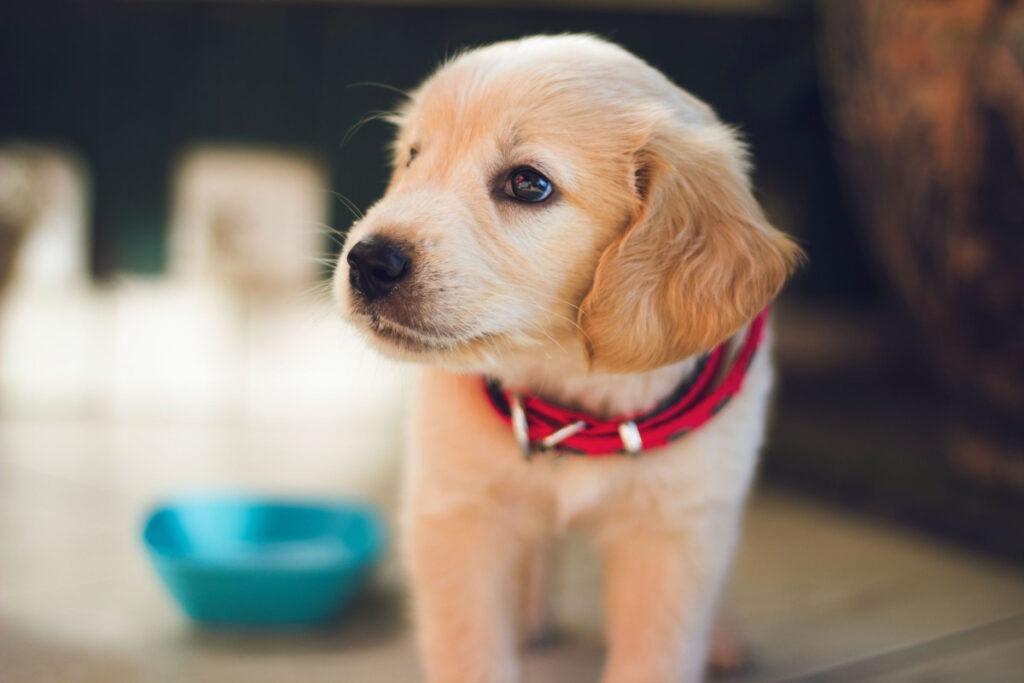 How Do I Potty Train A Dog