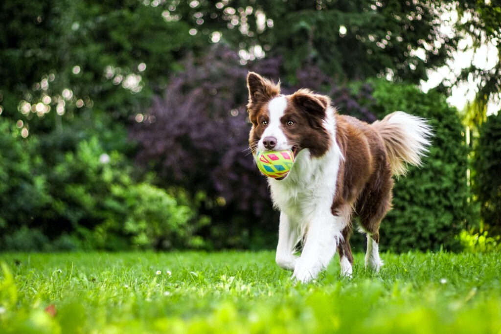 Tips On Dog Training