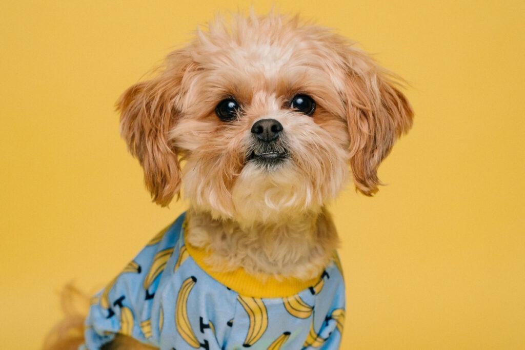 Tips On House Training A Dog