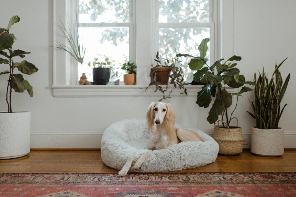 Best Ways To House Train A Puppy