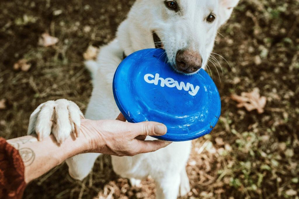 Behavior Training For Dog