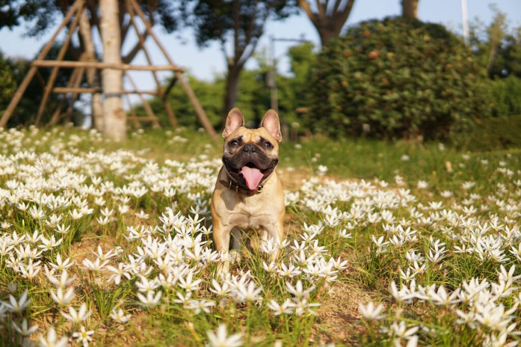 Behavioral Training For Dogs