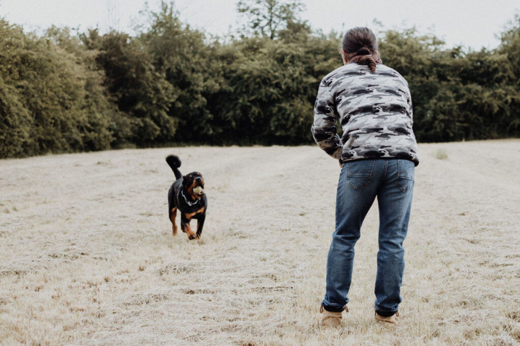 How Can I Train My Dog