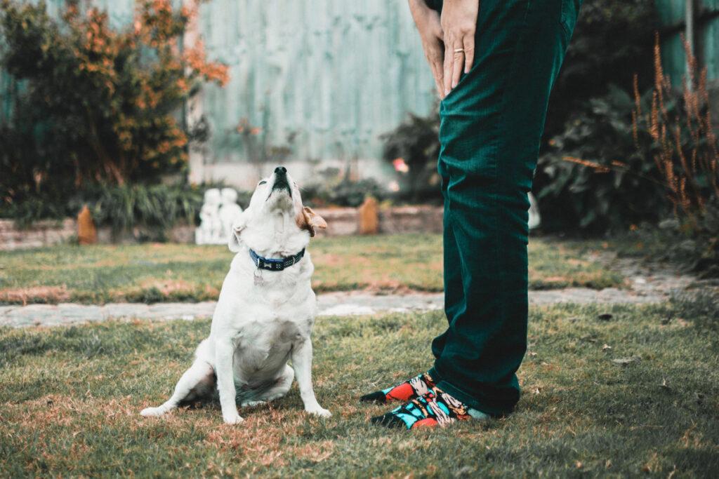 Basic Obedience Dog Training