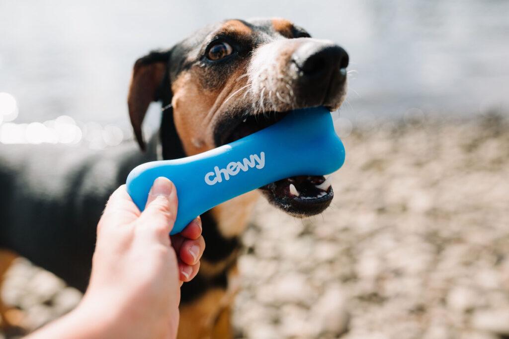 Free Basic Dog Training Tips