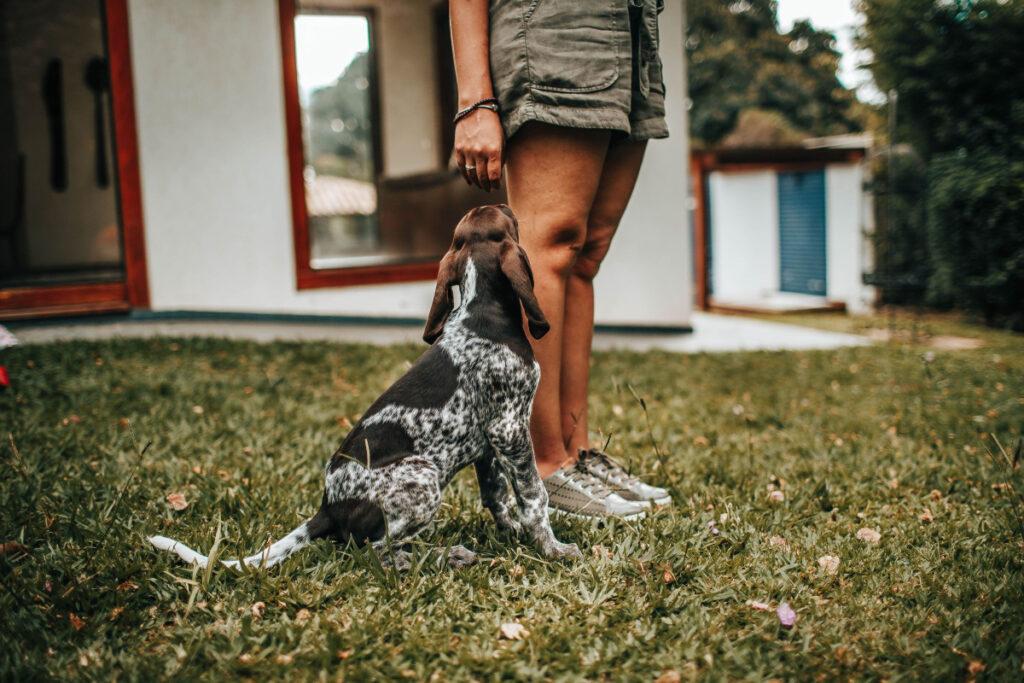 New Dog Training Methods