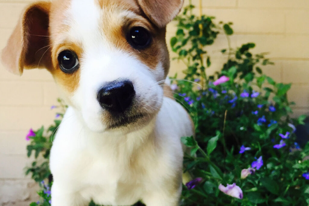Steps To Potty Training A Puppy