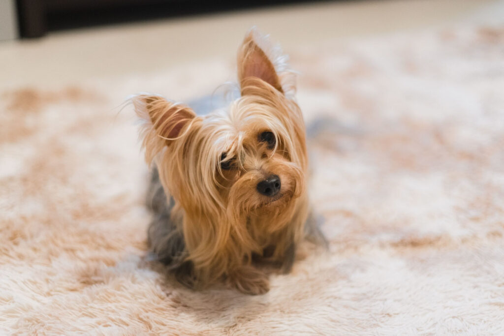 What Is The Best Way To Potty Train My Puppy