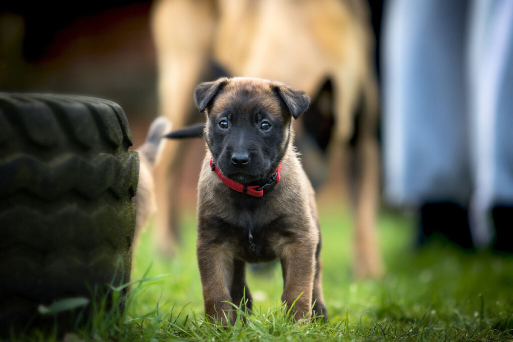 When To Start Crate Training A Puppy