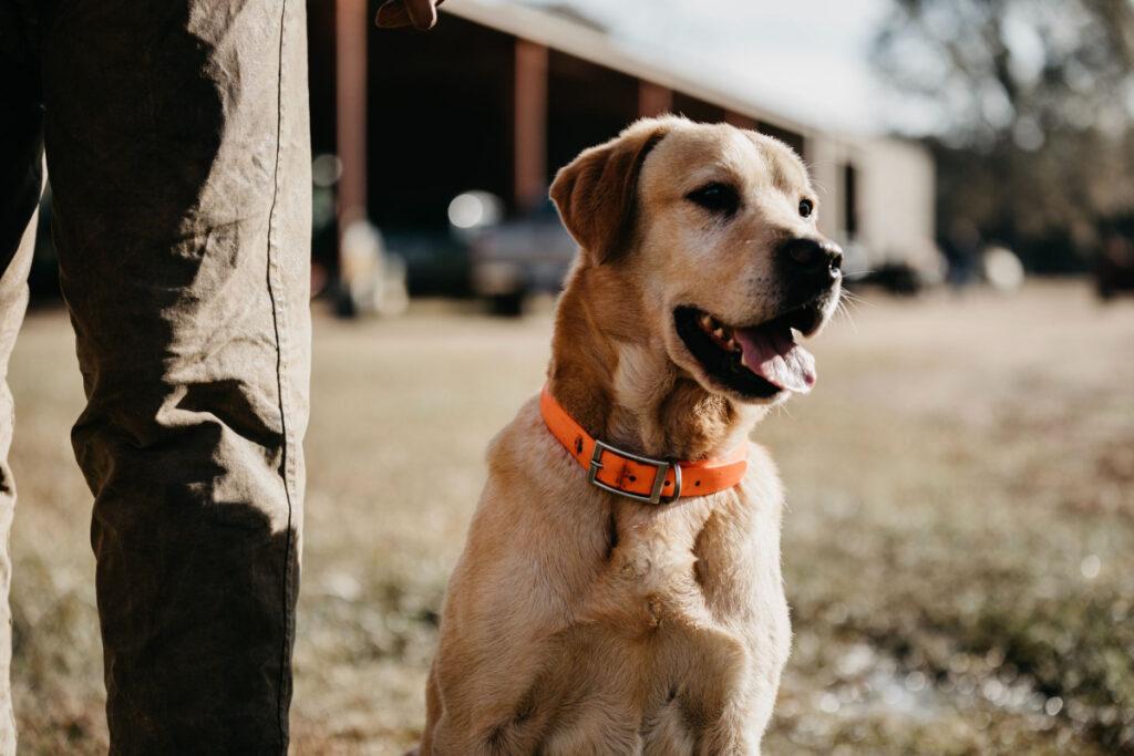 Dog Training Tips And Advice