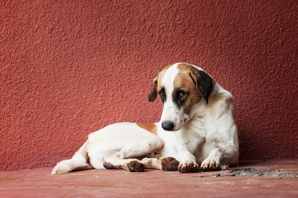 How Do You House Train A Dog
