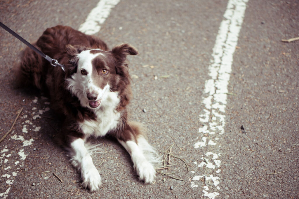 How To Make Your Dog Listen To You - Learn The Undisclosed Tips