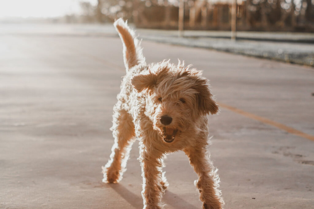 How To Stop Aggressive Behavior In Dogs