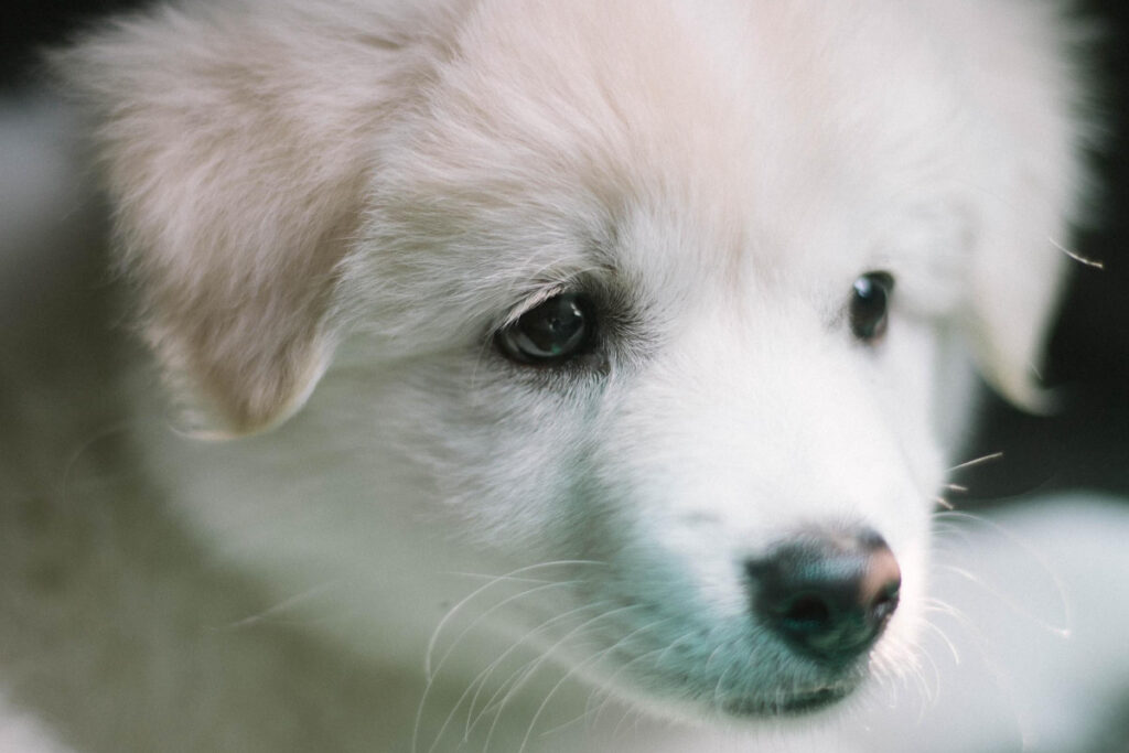 How To Toilet Train A Puppy In 7 days