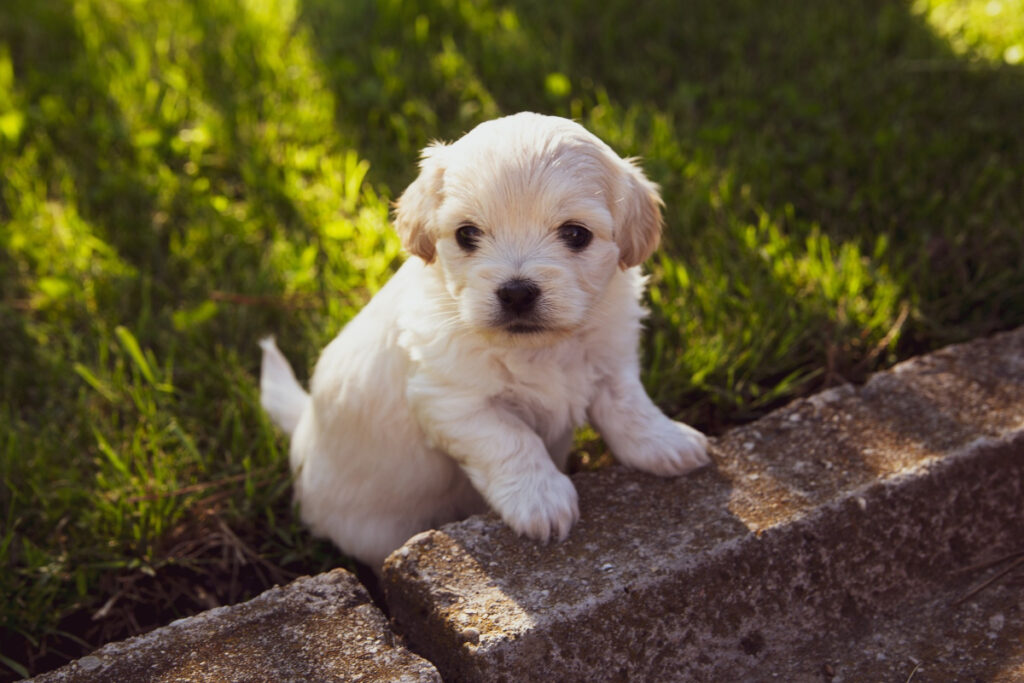 Potty Training For Small Puppies