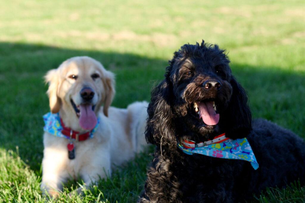 Dog Training Secrets Review