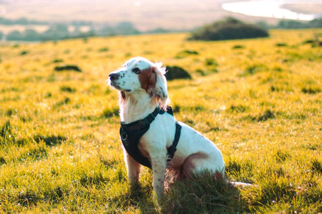 How To Correct Aggressive Puppy Behavior