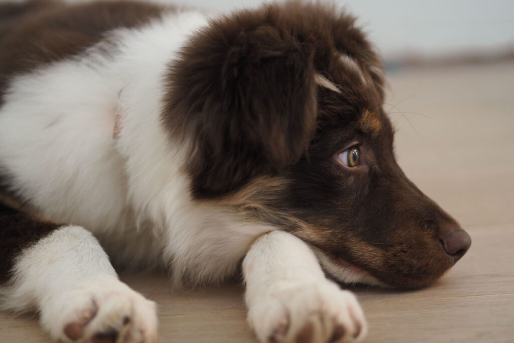 How To Potty Train A Dog Without A Crate