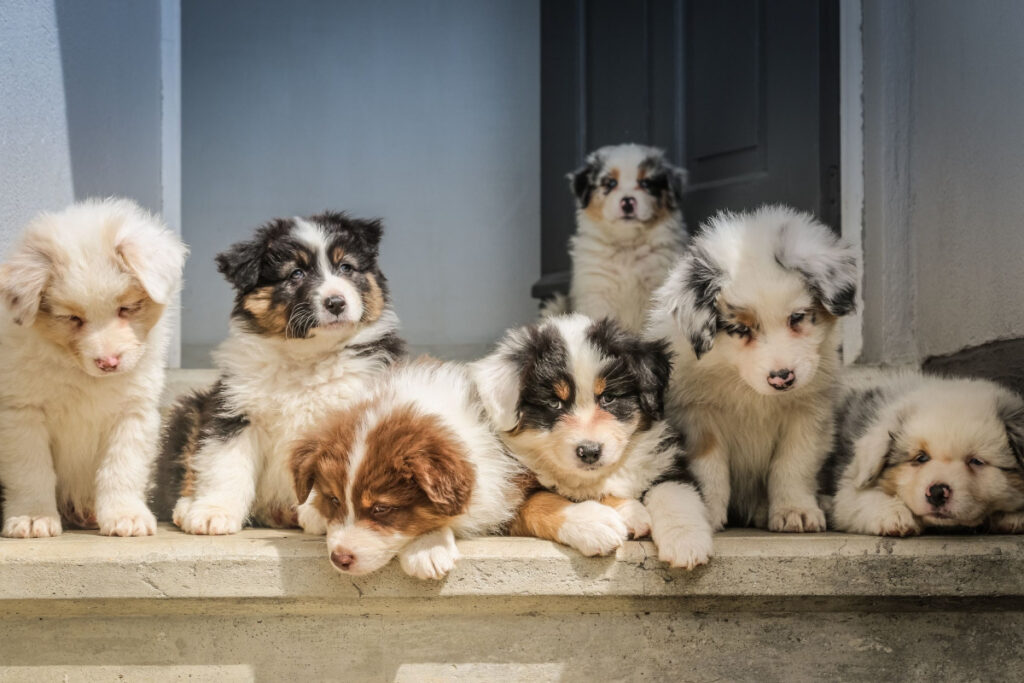 How To Stop Aggressive Puppy Behavior