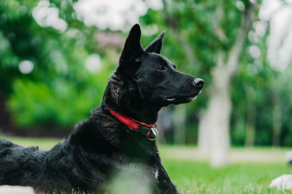 Training An Outdoor Dog