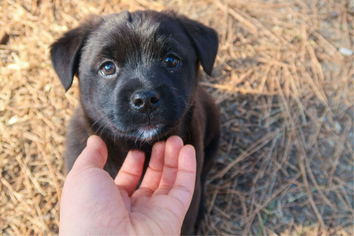 How To Get Your Puppy To Listen To You