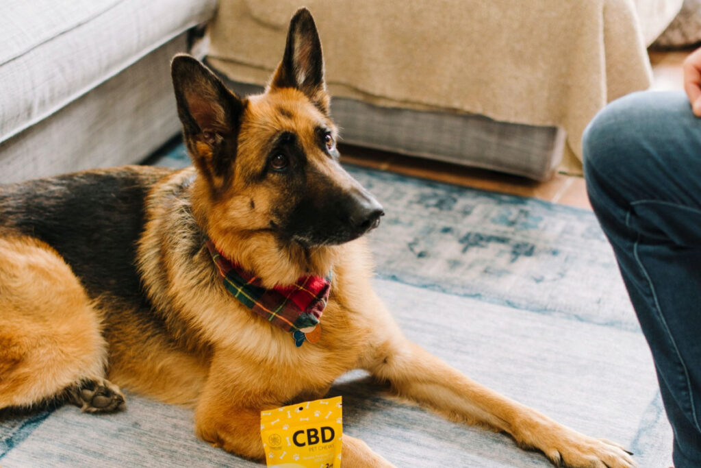 How To Treat Anxiety in German Shepherds