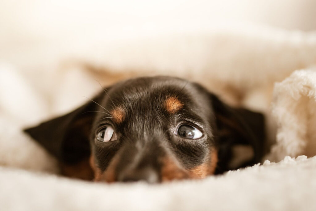 How To Prevent Separation Anxiety In Puppies