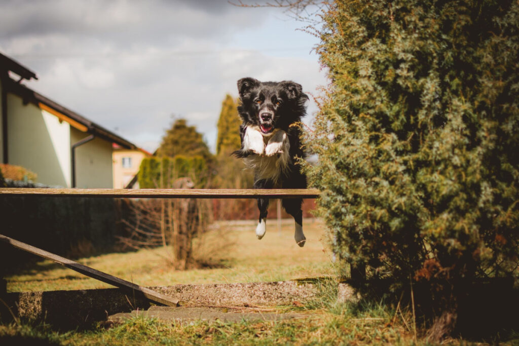 How To Stop A Dog From Jumping A Fence
